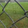 Tiny Spider Web on chain link fence